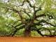 Родовое древо: Воронины - Александровы