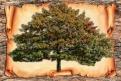 Зачем ребенку знать свое родовое древо?
